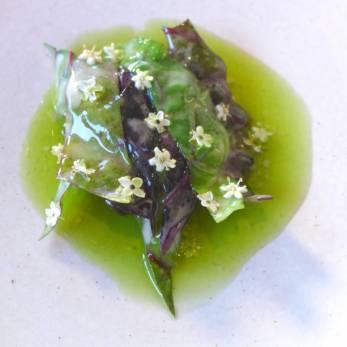 Biodynamisk grønt fra Bergsmyrene med svarthyll. Rått oksekjøtt fra Trøndelag med fermentert hvitløk og vinaigrette laget på røkt beinmarg.