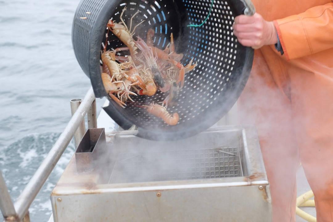 Krepsen legges i kokende vann.