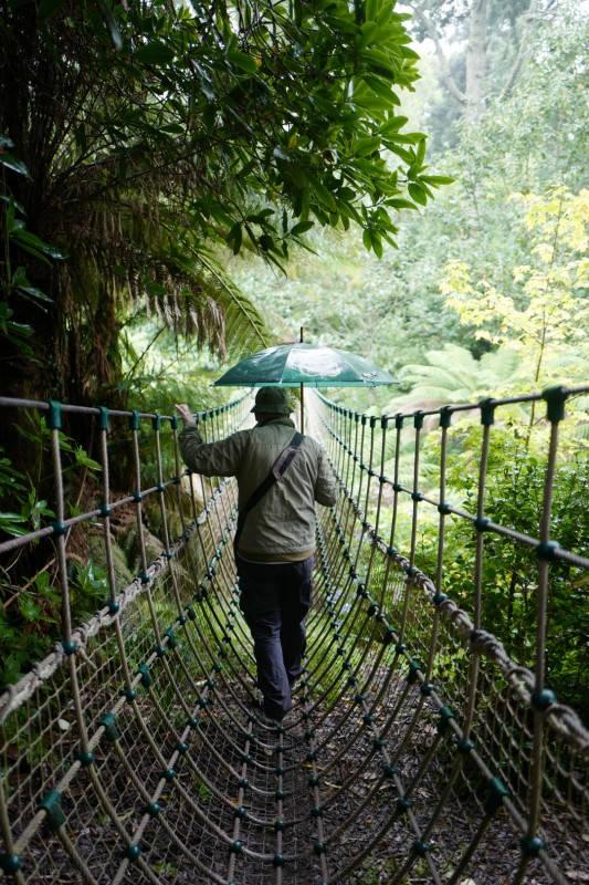 Tropiske forhold