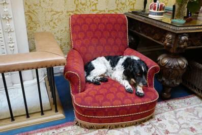 Slottshund