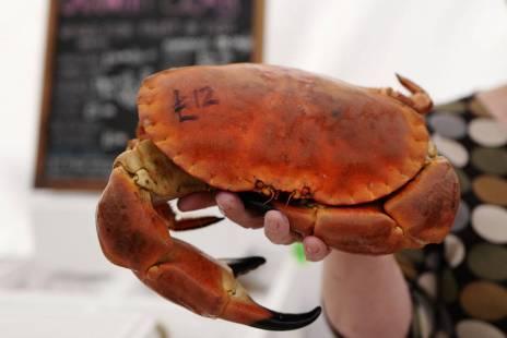 Cornish Brown Crab.