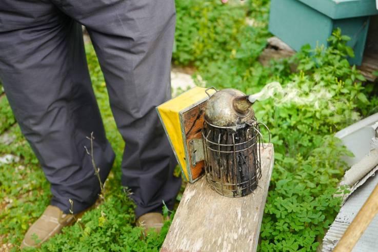 Biene skal røykes ut slik at man kan ta ut honningtavlene.