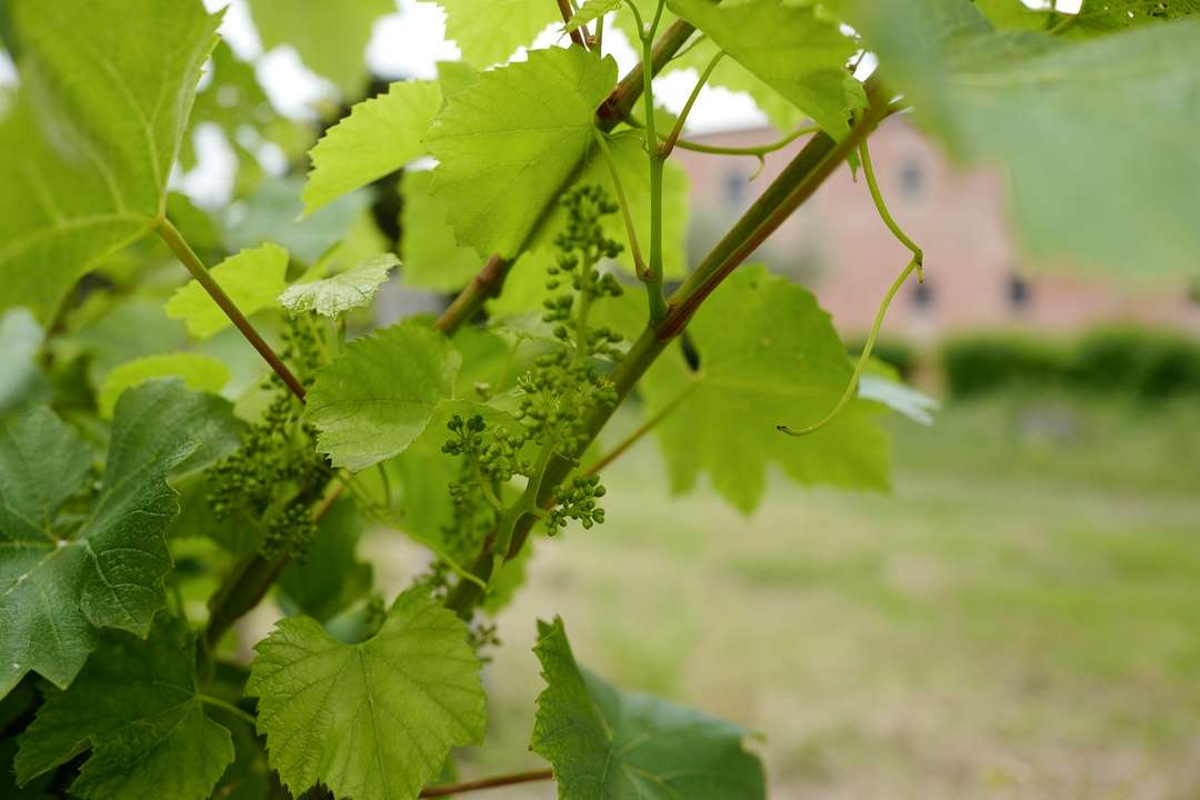Abruzzo_wine_italianwine_helleskitchenL1680188