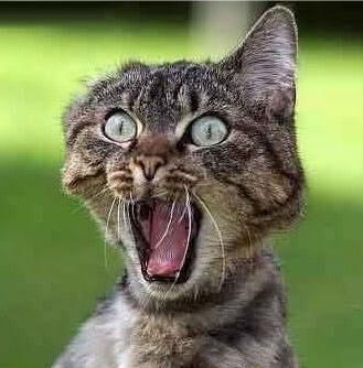 Image result for startled cat