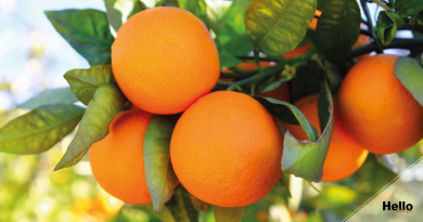 oranges from turkey, turkish oranges, washington oranges, alanya oranges,