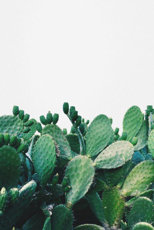 Ces plantes sans entretien // Hëllø Blogzine blog deco & lifestyle www.hello-hello.fr