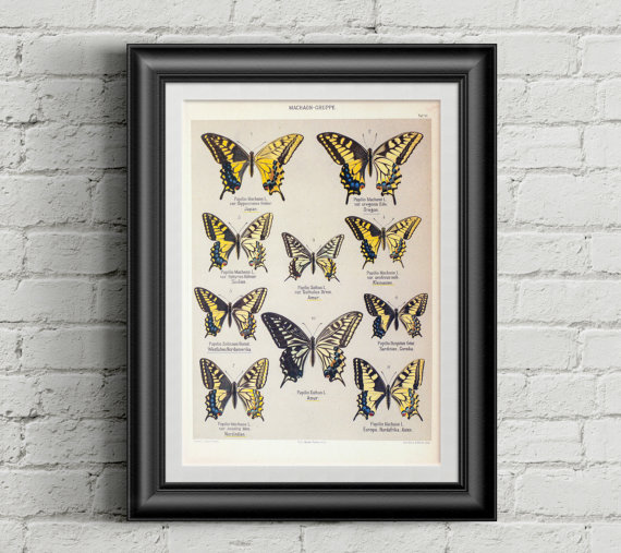 Butterfly Poster Vintage
