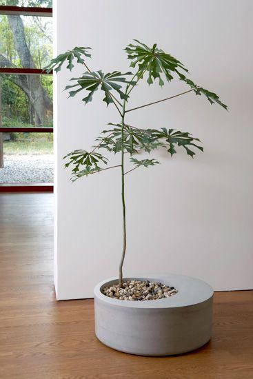Plante originale Manihot Grahamii // Hëllø Blogzine blog deco & lifestyle www.hello-hello.fr