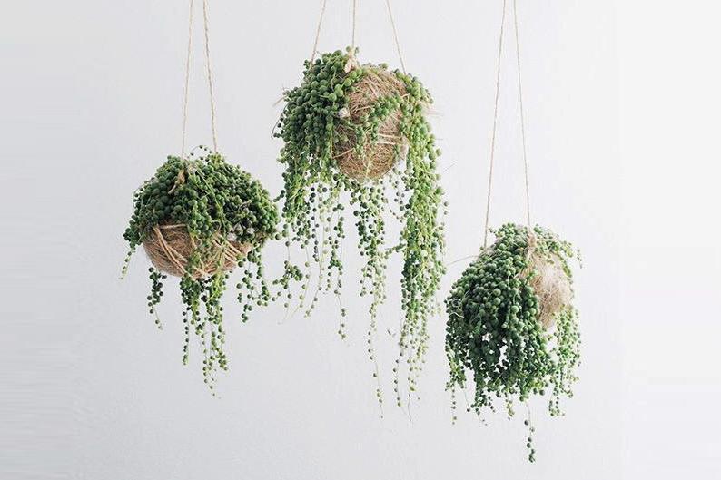 It Plants String Of Pearls // Hëllø Blogzine Blog Deco U0026 Lifestyle Www.