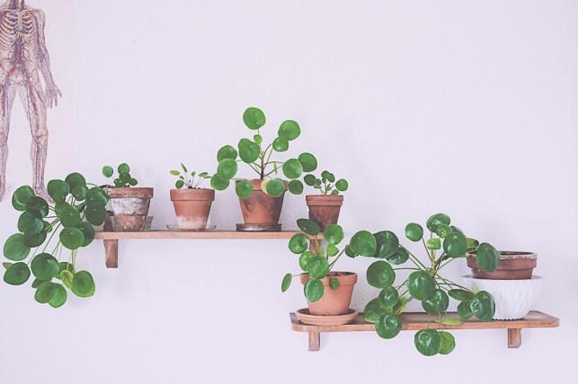 Pilea Plantes d'intérieur déco // Hëllø Blogzine blog deco & lifestyle www.hello-hello.fr