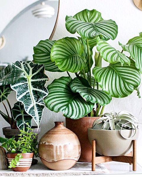 Les tendances d co 2018 qui vont cartonner d 39 apr s pinterest - Plantas de interior tropicales ...