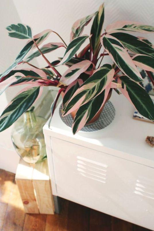 5 plantes roses // Hëllø Blogzine blog deco & lifestyle www.hello-hello.fr