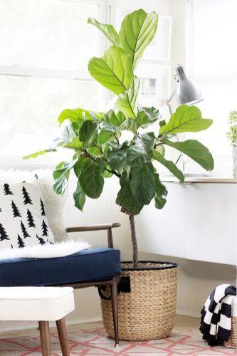 Plantes d'intérieur qui poussent vite // Hellø Blogzine blog deco & lifestyle www.hello-hello.fr