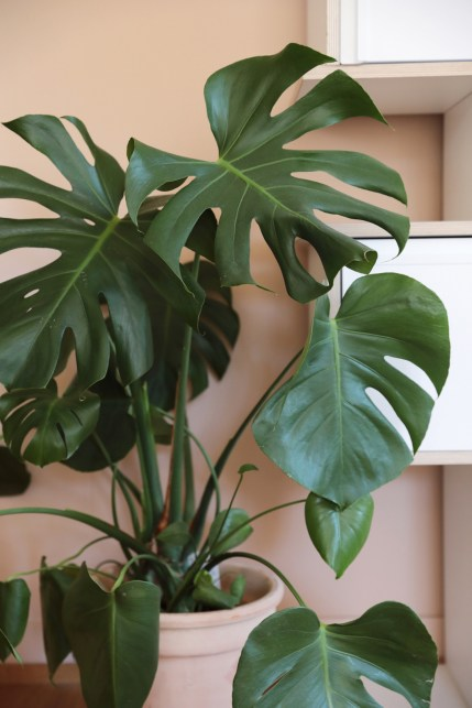 It-Plants Plantes Vertes Originales Oxalis // Hëllø Blogzine blog deco & lifestyle www.hello-hello.fr