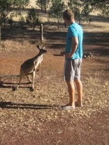 2014.01.25 - Flinders Range National Park (4)