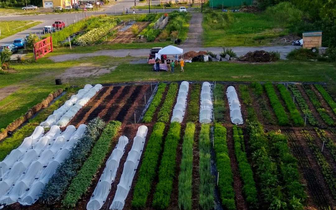 Urban Farming in Buffalo – Back to the Future