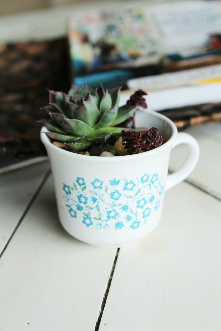 Diy Succulent Teacup Planter- Creative Family