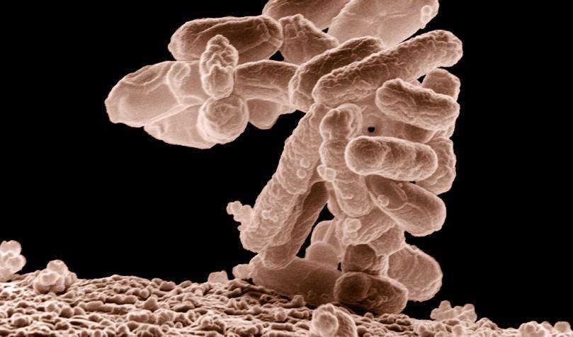 Super-bacterie imuna la antibiotice