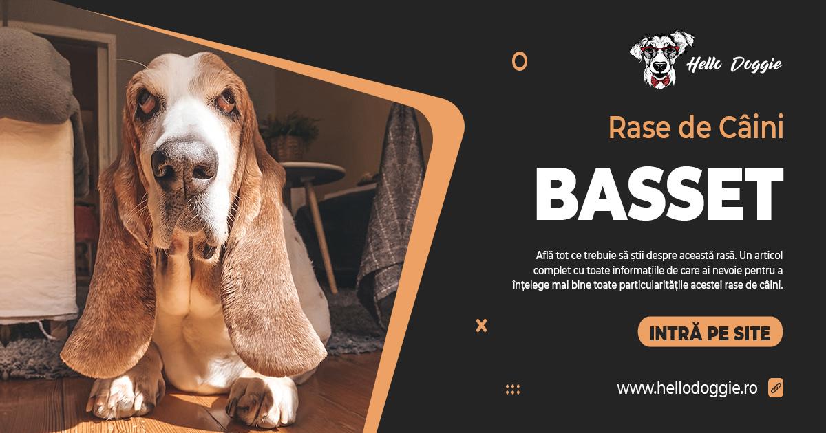 Rase de câini - basset hound - poze caini basset - caracteristici basset