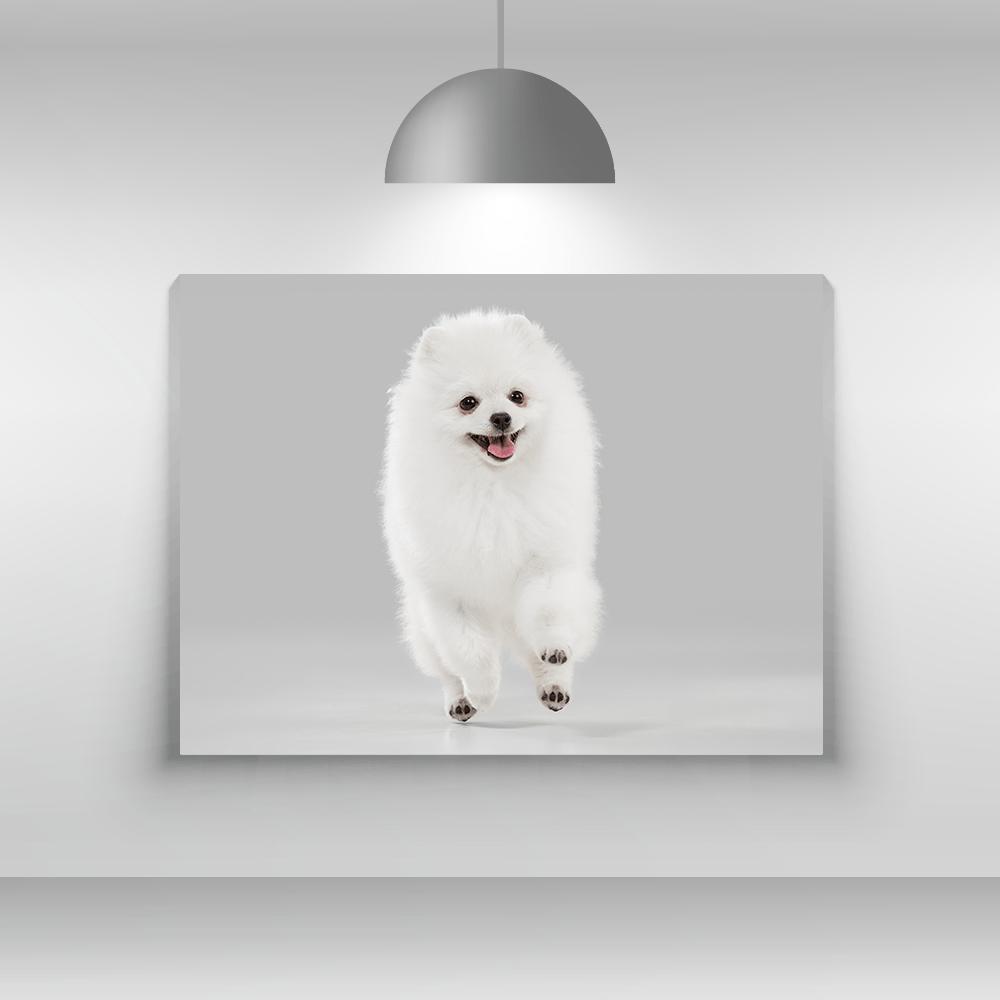 Tablou canvas - tablou - Pomeranian - canvas cu caini