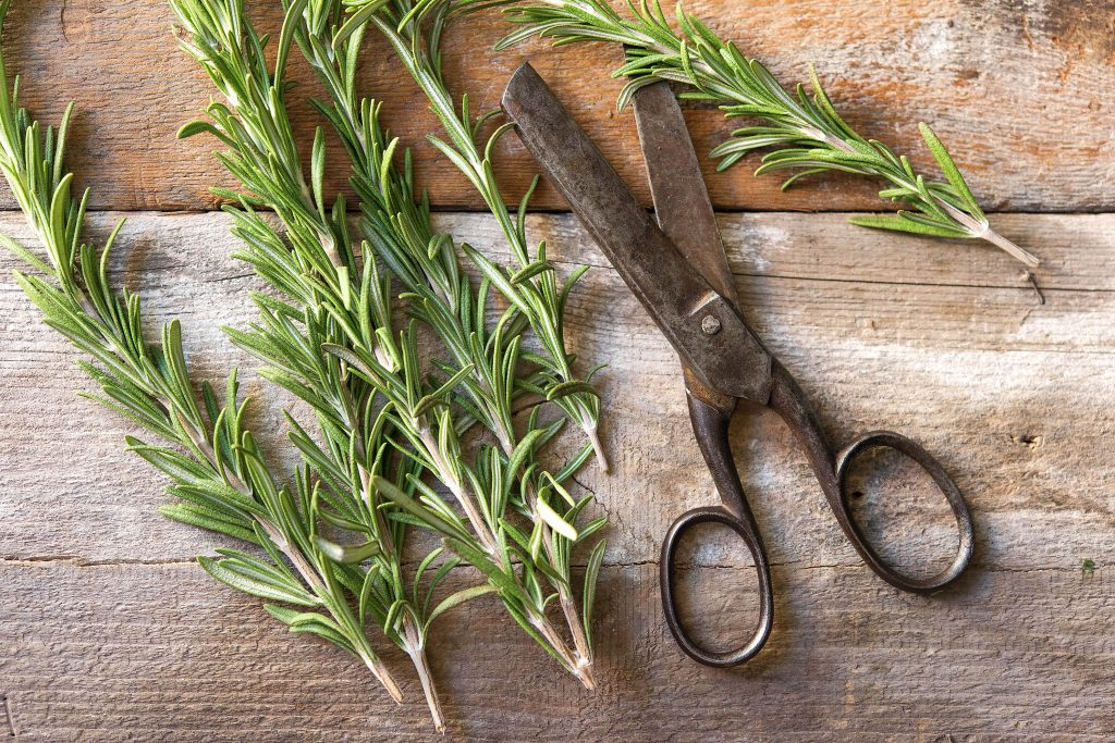 brain foods-rosemary-HelloFresh