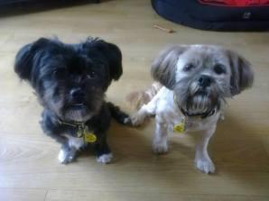 Misty and Maisy