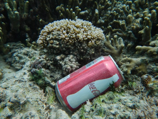 Earth Day Mangroves Seagrass & Coral Reefs