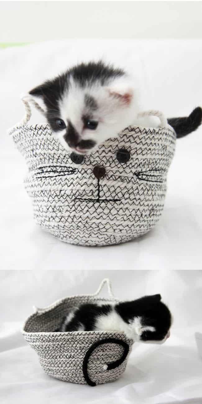 Cat DIY Rope Basket | HelloGlow.co
