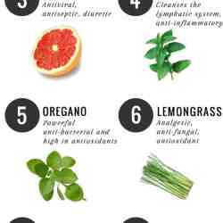 10 Best: Essential Oils for Detox