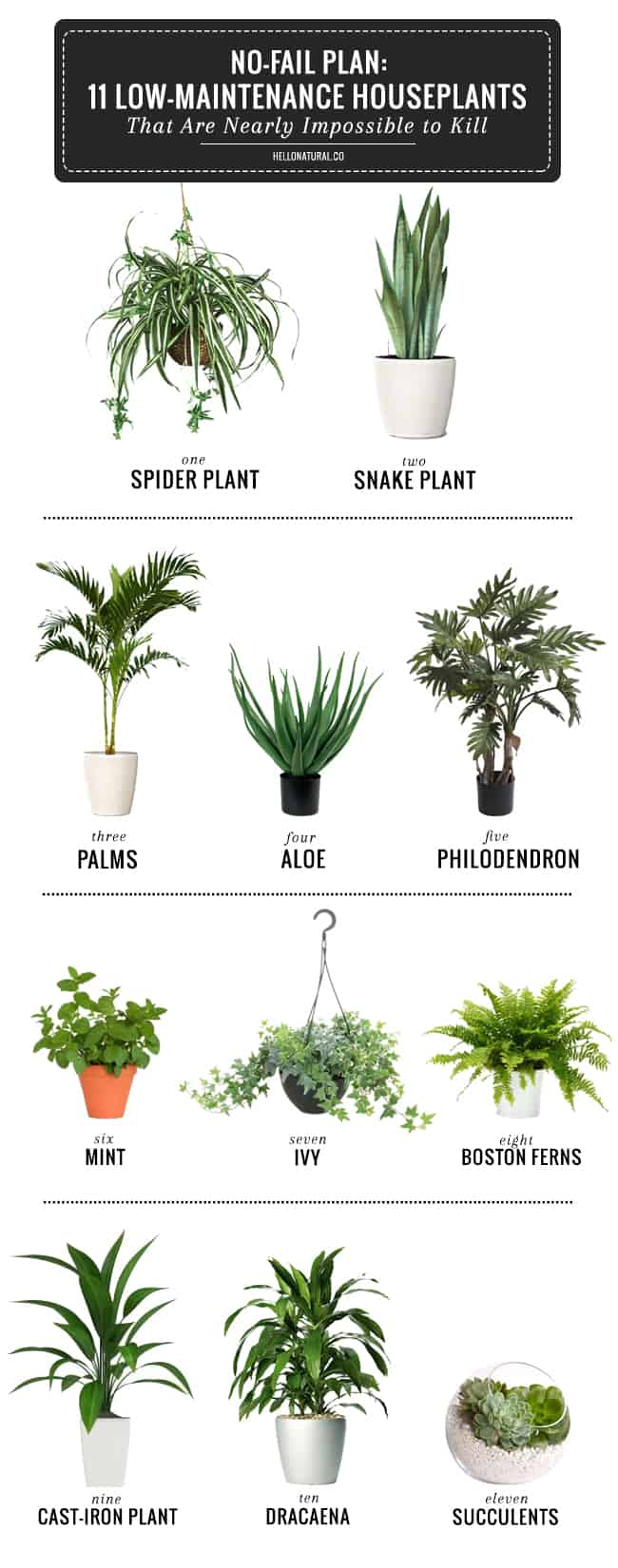 Best Kitchen Gallery: 11 Easy To Grow Houseplants Helloglow Co of Tropical Ivy House Plants on rachelxblog.com