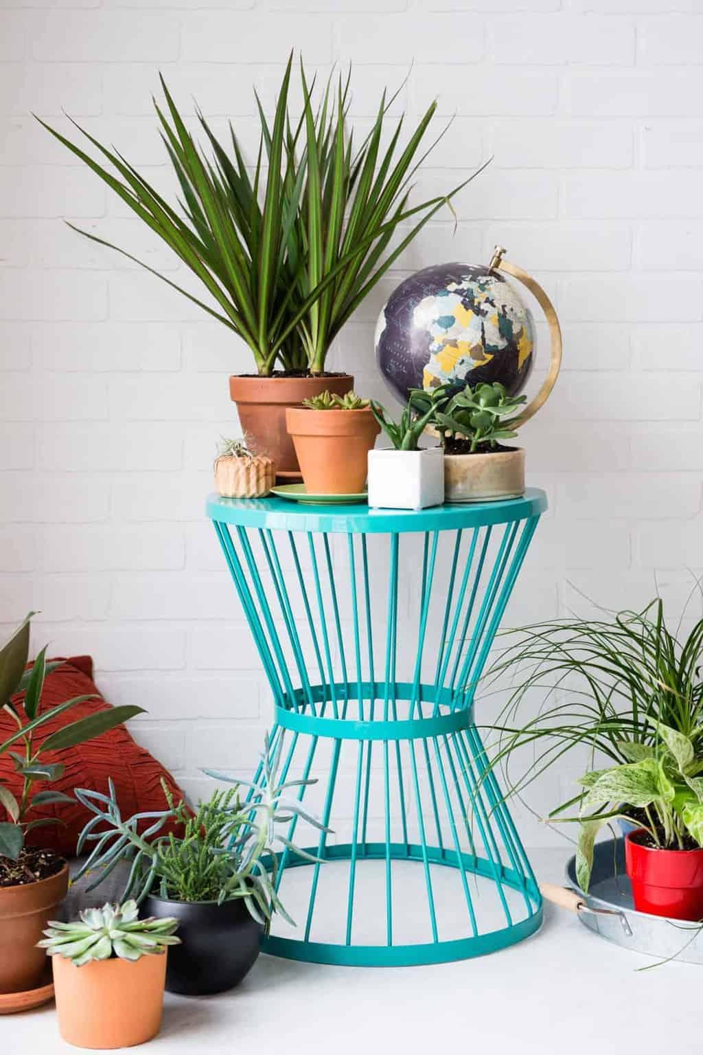 Low Maintenance Plants For Indoors No Plant Care Needed Terrarium