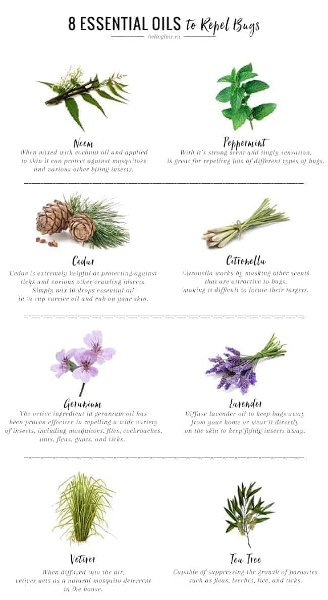 8 Essential Oils That Repel Bugs Naturally  Hello Glow