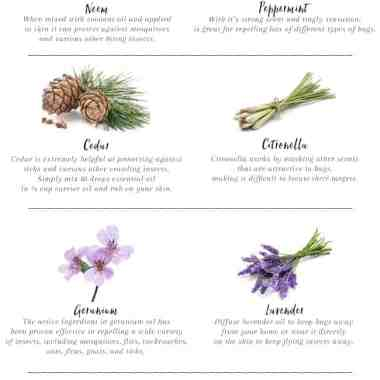 8 Essential Oils That Repel Bugs Naturally