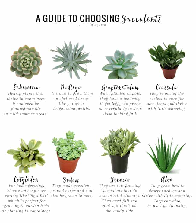 The No-Fail Guide To Choosing + Growing Succulents