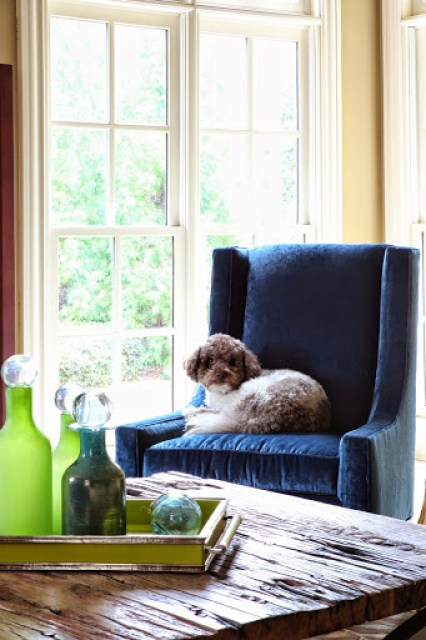 Dog friendly rooms www.roomsrevamped.com