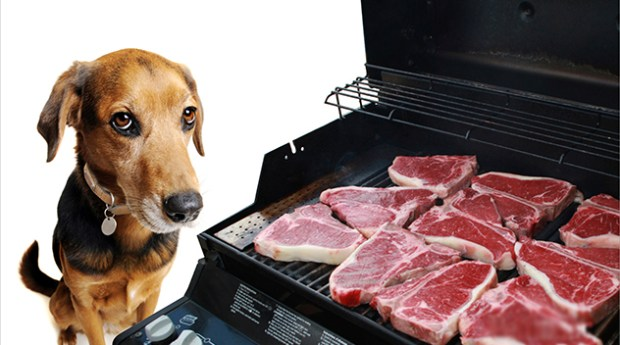 Dog grilling steaks  Rooms Revamped Interior Design