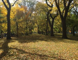 Travel: Central Park in the Autumn