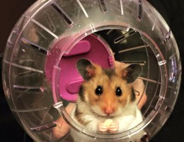 Things You Should Know Before Owning a Hamster