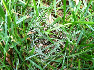 Dew on Spiderweb in the Grass