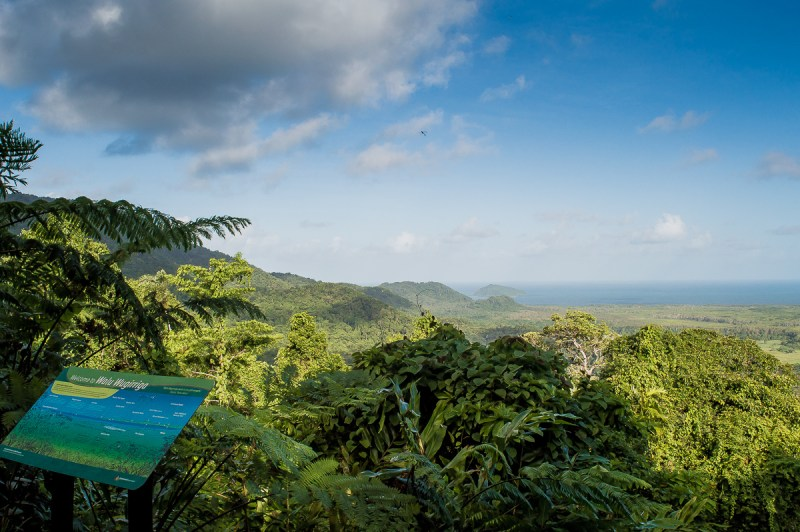 lookout dans la rainforest
