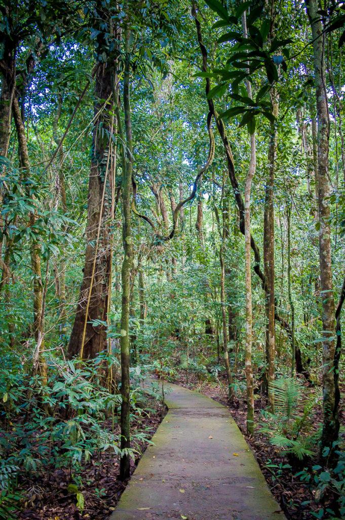mangrove dans la rainforest