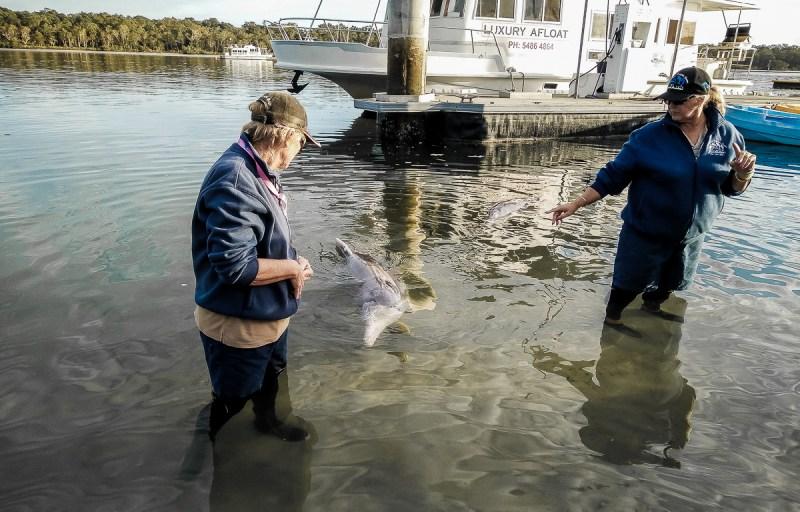nourrir les dauphins à tin can bay