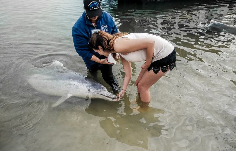 nourrir un dauphin à Tin can bay