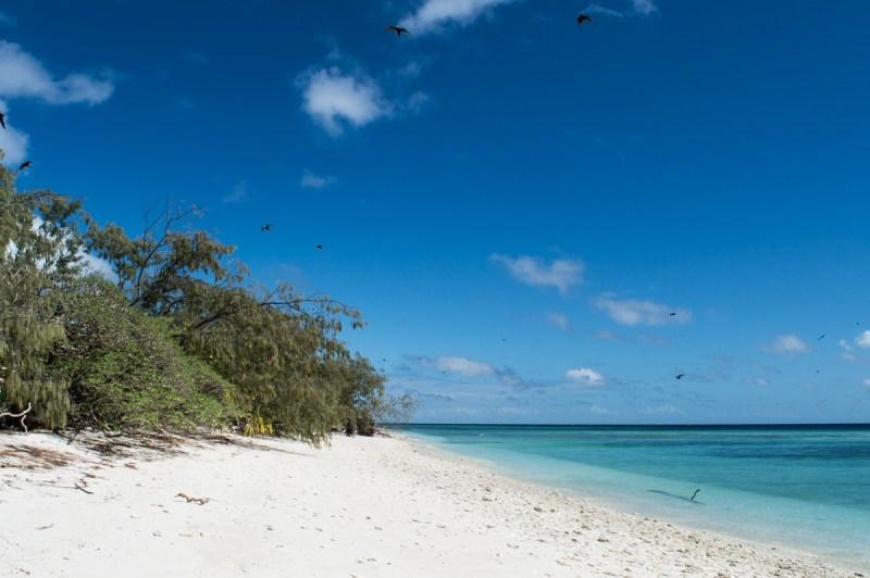 oiseaux marins à lady musgrave island