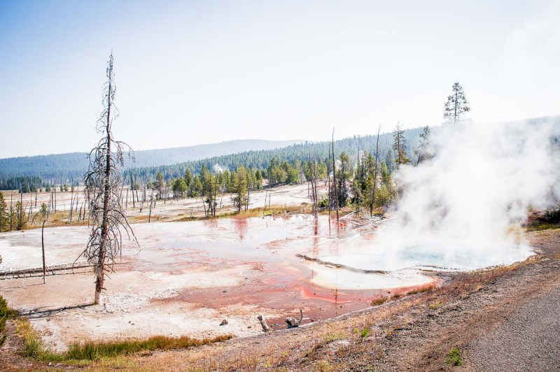 bactéries thermophiles rouges a Yellowstone