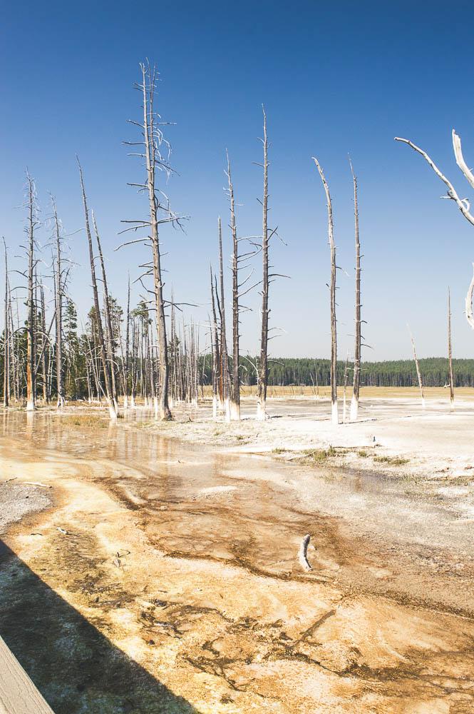 arbres secs à fountain paint pots à yellowstone