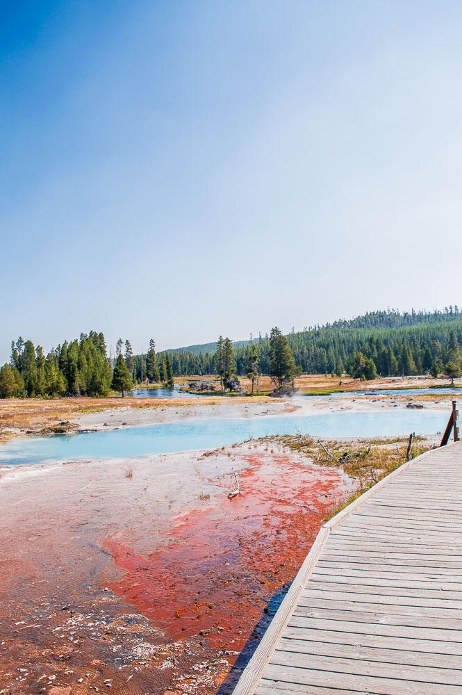 bactéries thermophiles dans le parc de yellowstone