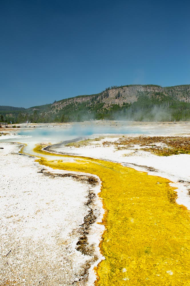 bactéries thermophiles jaunes à yellowstone