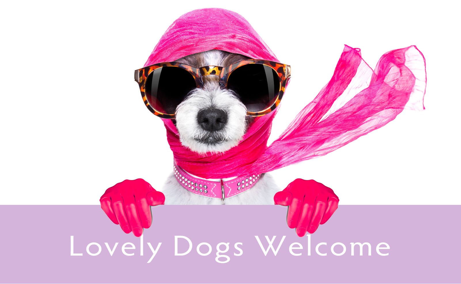 lovely dogs welcome