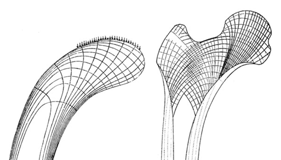Biomimetics as a tool for the development of new materials